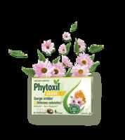 Phytoxil Gorge & Défenses Naturelles Pastilles B/20 à SAINT-MARCEL