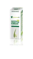 Huile Essentielle Bio Eucalyptus Globuleux à SAINT-MARCEL