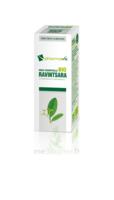 Huile Essentielle Bio Ravintsara à SAINT-MARCEL